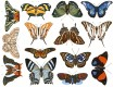 DECAL NR. 25 COLOR BUTTERFLIES (FARBE) MAX. 800°C, <br><i>Preis pro Stück</i>