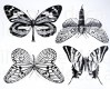 DECAL NR. 22 LARGE BUTTERFLIES (GOLD) MAX. 800°C, <br><i>Preis pro Stück</i>